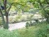 館裏の川の様子