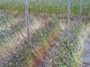 「新そば」収穫 手刈り→天日干し