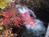 小さな滝とモミジ