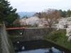 2013年4月23日 鶴ヶ城の桜
